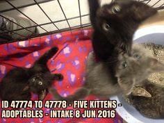 Kittens, Cats, Shelters, Type 3, North Carolina, Facebook, Photos, Cute Kittens, Gatos