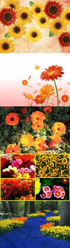 Litmus Flowers Yellow & Orange