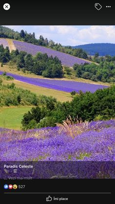Beautiful World, Beautiful Places, Beautiful Pictures, Lavender Flowers, Wild Flowers, Lavander, French Lavender Fields, Sunset Landscape, Natural Wonders