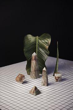 Dead Flowers - David Abrahams Photography