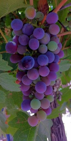 .       ~The Gifts from the Vine.....and those colors.....wow  <3 ~