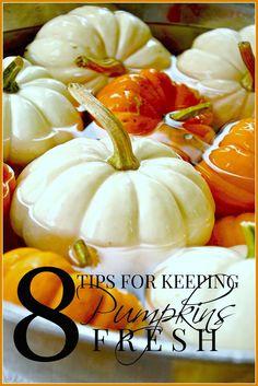 KEEPING PUMPKINS FRESH Easy tips for keeping pumpkins fresher longer