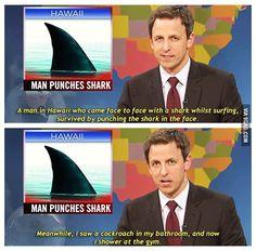 Man punches shark
