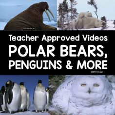 Arctic Animal Videos - Polar Bears, Penguins, Walruses, Arctic Hares, and more!