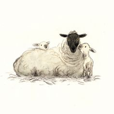 briony may smith Animal Sketches, Animal Drawings, Art Sketches, Art Drawings, Watercolor Animals, Watercolor Art, Sheep Drawing, Lamb Drawing, Sheep Logo