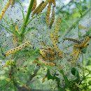 8 formas de prevenir plagas y enfermedades en el huerto y jardín ecológico ecoagricultor.com