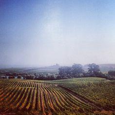 Napa Valley vineyard by ngipards