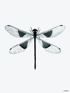 This Vanilla Fly poster features a dragonfly printed onto a cream background. Dragonfly Illustration, Dragonfly Drawing, Dragonfly Art, Dragonfly Tattoo, Dragonfly Quotes, Sleeve Tattoos For Women, Tattoos For Women Small, Real Tattoo, I Tattoo
