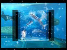 excellent aquarium show , fish exhibition,world big aquarium show