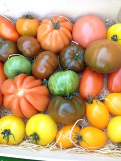 Mouthwatering tomatoes