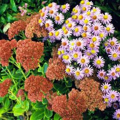 Top Butterfly Plants for Gardens in the Northeast