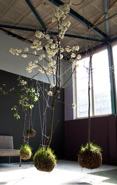 DARK & DELICIOUS INTERIORS - Kokedama (moss ball) string garden by Fedor van der Valk. Dark walls are about drama, so why feature a suspended garden inside, if you have the right kind of light and are handy with a spray bottle?