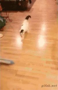 "funny-gif-1: ""Other Funny Gİfs http://funny-gif-1.tumblr.com/ """
