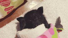 lil bat ear wiggle c: ✨✨  Follow @UnicornOnAcid16  ✨✨