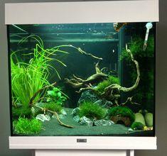 aquarium juwel lido 120 - Google zoeken