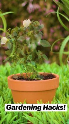 Lawn And Garden, Indoor Garden, Garden Plants, Indoor Plants, Outdoor Gardens, Growing Greens, Growing Plants, Growing Vegetables, Container Gardening