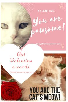 Valentine's Day cat e-cards