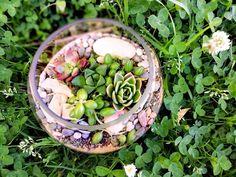 Medium Fishbowl Terrarium Fishbowl, Auckland, Terrarium, Acai Bowl, Succulents, Medium, Plants, Round Fish Tank, Terrariums