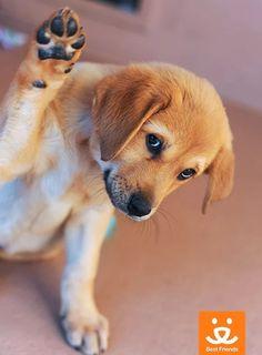 Cutie!!! Best Friends Animal Society ☺