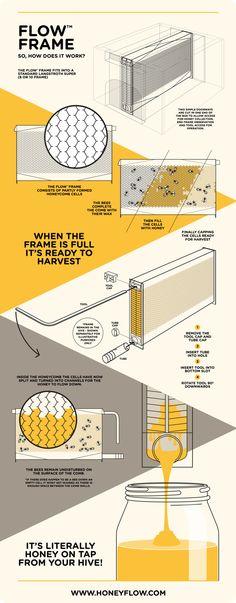 Flow Hive : La ruche qui va révolutionner l'apiculture | NeozOne
