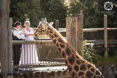 Auckland Zoo Wedding Photos