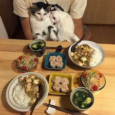 Japanese Couple Captures Every Time Their Cats Watch Them Eat - Catz - Cicákok - Essen Cute Kittens, Cats And Kittens, Animals And Pets, Cute Animals, Animal Fun, Japanese Couple, Cat Watch, Curious Cat, Cat Food