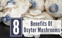 8 Amazing Benefits Of Osyter Mushrooms And A Few Recipes