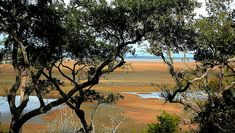 Such warm colors as one looks through trees that show the beauty of the salt marsh in winter on Kiawah Island, south Carolina. Canvas Prints, Framed Prints, Bird Watching, Warm Colors, Wood Print, South Carolina, Country Roads, Tapestry, Island