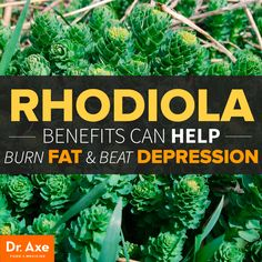 "Rhodiola Rosea known as ""golden root"" is an adaptogen herb with extreme fat…"