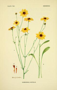 v.23 (1954-1959) - Addisonia : - Biodiversity Heritage Library