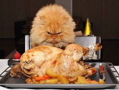 Your cat will stake a claim on that chicken if you turn your back. See that face?