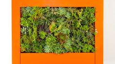 Corporate Plantscape