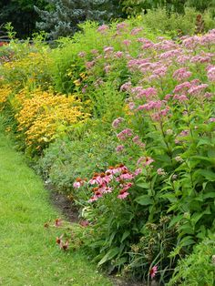 Purple coneflower, Joe Pye Weed, Rudbeckia and other late summer bloomers at the TBG Where did the summer go? Toronto Gardens, Ornamental Grasses, Late Summer, Botanical Gardens, Perennials, Bloom, Landscape, Garden Ideas, Plants