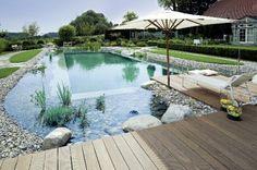 Beautiful backyard Natural Swimming pool.