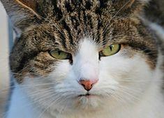 How to Coach a Grumpy Teacher Mau Humor, Cat Sitter, Colouring Pics, Cat Sleeping, Cat Face, Grumpy Cat, Cat Memes, Cool Cats, Cats Of Instagram