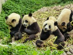 Teach English in China part time for a full time wage. Teach English in China today. China Today, English China, Teaching English, Mind Blown, Pandas