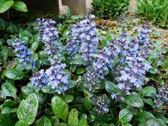 Mediterranean Garden, Garden Plants, Flowers, Garden Ideas, Gardening, Florals, Lawn And Garden, Landscaping Ideas, Backyard Ideas
