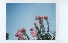 pink flower   jayplorin   Flickr Instant Print Camera, Card Sizes, Pink Flowers, Plants, Fun, Photos, Photography, Pictures, Photograph