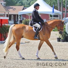 What Life Means as an Equestrian Pretty Horses, Horse Love, Hunter Under Saddle, Equestrian Quotes, Florida Style, Majestic Horse, Dressage Horses, English Riding, Hunter Jumper
