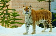 Secret Zoo merupakan kebun binatang Modern pertama di Jawa Timur , project pengembangan setelah jatim park 1. Wisata edukasi tentang habitat hewan dialam