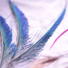 Rev up your world with a splash of larger-than-life colours! Get these gorgeous Overdyed Peacock Swords coloured hot pink, orange, royal blue, lime and more. Peacock Bird, Peacock Feathers, Color Of Life, Swords, Royal Blue, Larger, Hot Pink, Lime, Diy Crafts