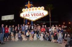 Kutyákkal a lelki békéért Las Vegasban.