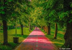 Photography Photos, Sidewalk, Country Roads, Explore, Side Walkway, Walkway, Walkways, Pavement, Exploring