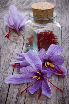 """Saffron has been described as a spice that is worth more than its weight in gold. It is so expensive that you may wonder """"Can I grow saffron crocus bulbs and harvest my own saffron?"""" Read here to find out. Saffron Crocus, Saffron Flower, Saffron Plant, Growing Saffron, Saffron Spice, Saffron Tea, Crocus Bulbs, Spices And Herbs, Foodblogger"""