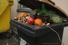 How To Help Your City Reduce Food Waste Moldy Cheese, Food Waste Recycling, Food Policy, Waste Reduction, Head Of Lettuce, Soup Kitchen, International Recipes, Compost, Agriculture