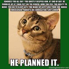 cats = no good.
