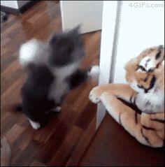 【動画あり】見事なネコパンチを繰り広げるネコが話題に : 暇人\(^o^)/速報 - ライブドアブログ