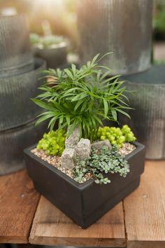 Bonsai Garden Pots & Planters Diligent 100 Pcs Very Rare Mini Red Succulent Plants Mexico Rainbow Jade Merry Christmas Bonsai Plants For Home Garden
