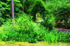 The Sarah P. Duke Gardens consist of approximately 55 acres of landscaped and wooded areas at Duke University. There are 5 miles of allées, walks, and pathways throughout the garden