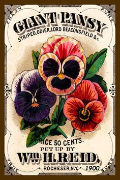 Olde America Antiques | Quilt Blocks | National Parks | Bozeman Montana : Flowers - Pansy Giant
